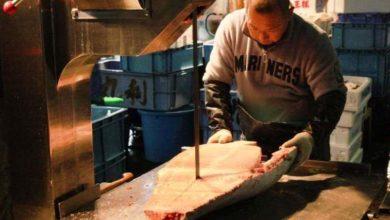 Bild von Tsukiji in Tokio: Zu Besuch im weltgrößten Fischmarkt