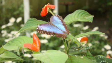 Photo of Zehn Tiere, die du in Costa Rica sehen musst