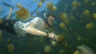 Photo of Palau: 5 Gründe warum sich die Reise ins weit entfernte Taucherparadies lohnt