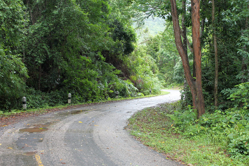Wie im Urwald: Der Weg rund um den Phuket-Stausee führt durch dichte Wälder. Foto: Sebastian Prestele