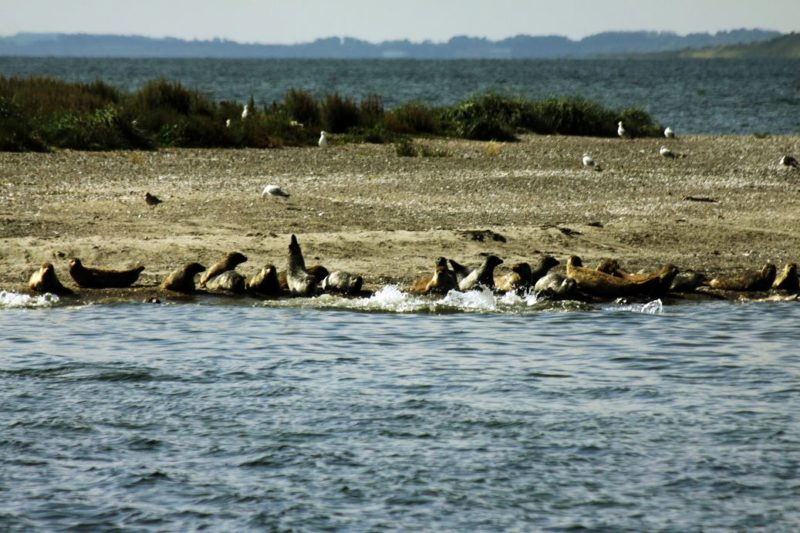 Mit seinen Seehundbanken wirkt der fjord eher wie ein kleines Meer. Foto: Leonie Reuter.