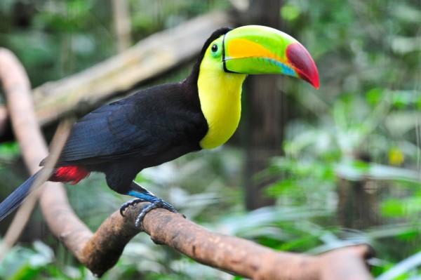 Landgang in Belize: Nicht nur Passagiere, sondern auch bunte Vögel kommen der Bordfotografin vor die Linse. Foto: M. Luft.