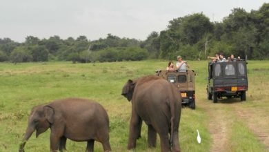Photo of Sri Lanka: 8 Highlights, die dich begeistern werden