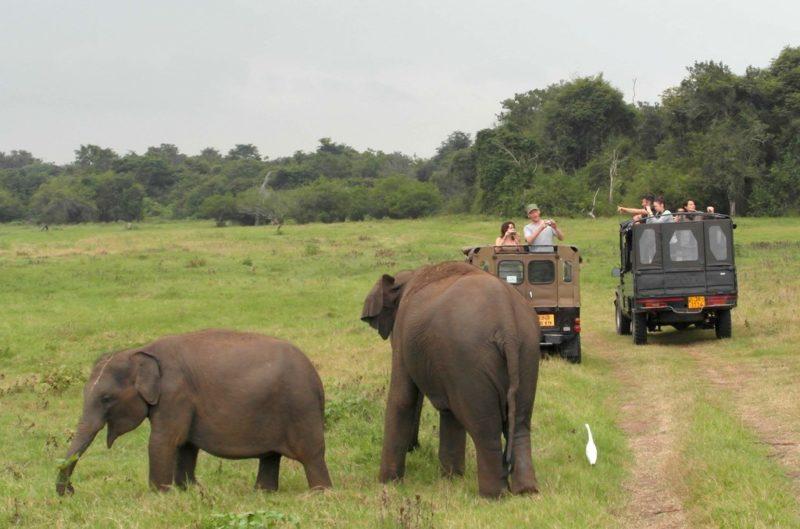 Im Kaudulla Nationalpark kommst du auf Armeslänge an die Elefanten heran - oder manchmal kommen sie auch zu Dir.