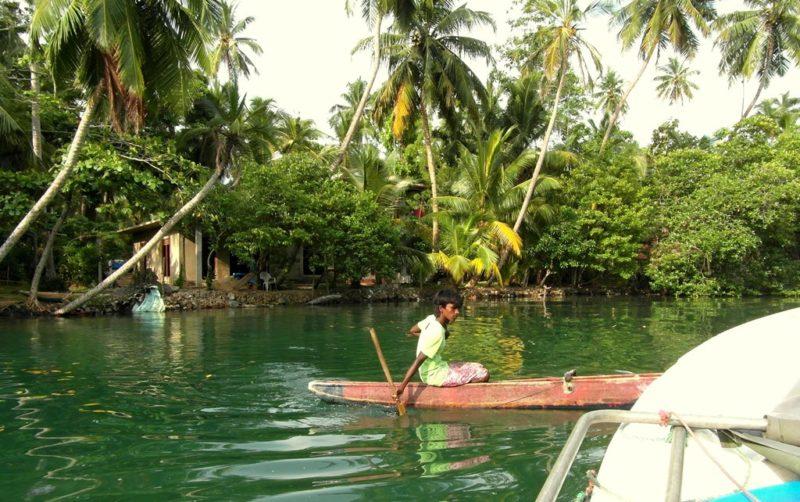 Madu River Tour: Eine Exotik pur: Die einzigartige Mangrovenlandschaft am Fluss Madu.