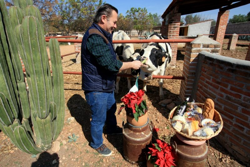 Glückliche Kühe: Die organische Farm Wai.