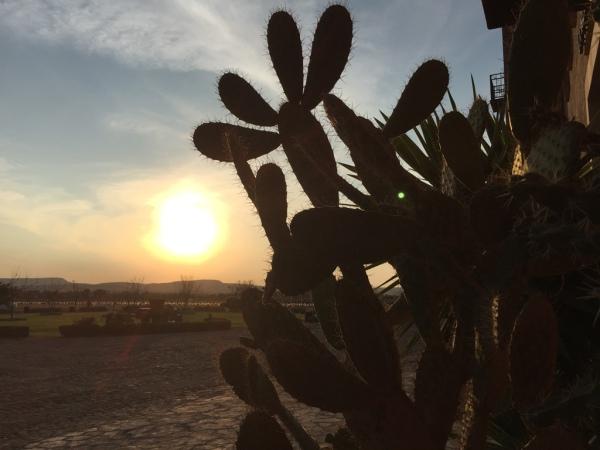 Reisen in Mexiko: Für die wenigstens eine so stachelige Angelegenheit wie dieser Kaktur.