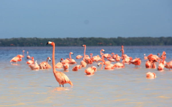 Flamingos überwintern: Mexiko bietet Tierfreunden viele Möglichkeiten.