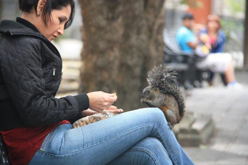 Zahme Tiere: So zutrauliche Eichhörnchen habe ich noch nie gesehen.