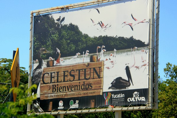 Die Flamingos im Reserva de la Biosera Ria Celestun sind die Hauptattraktion des kleinen Fischerdorfs im Norden der Yukatan-Halbinsel. Fotos. O. Zwahlen