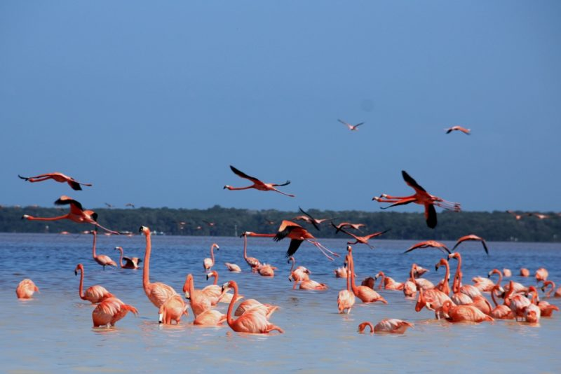 Das Ziel der Bootsfahrt: Eine Kolonie von rosa Flamingos.
