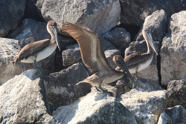 Auf der Mole bei der Flusseinfahrt warten bereits die ersten Vögel.