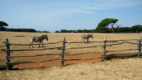 Privater Zoo des ehemaligen jugoslawischen Herrschers Tito auf der Insel Brijuni.