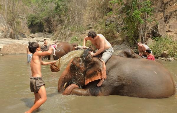 Ab ins Becken: Jeder Besucher darf seinen Elefanten abschrubben.