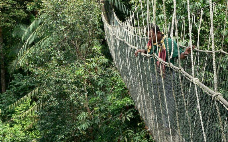 Durch die Baumwipfel: Der Canopy-Walk im Nationalpark Taman Negara.