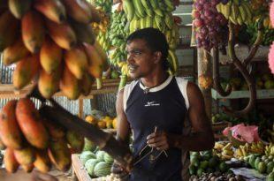 Bananenverkäufer in Galle, Sri Lanka.