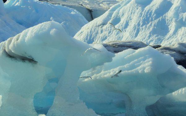 Leuchtend blaues Eis in der Gletscherlagune.