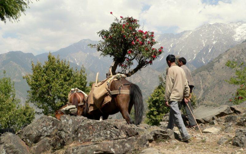 Trekking Route in der Nähe von Pokhara.