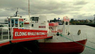 Photo of Island: Fünf Dinge, die ich beim Whale Watching lernte