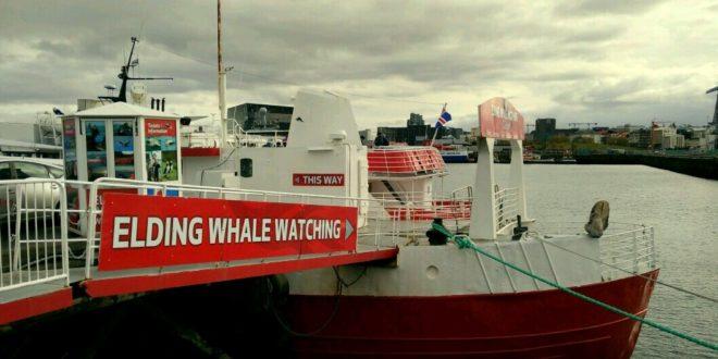 Island: Fünf Dinge, die ich beim Whale Watching lernte