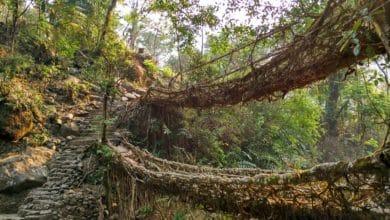 Bild von Cherrapunji: Zauberwald mit lebendigen Brücken