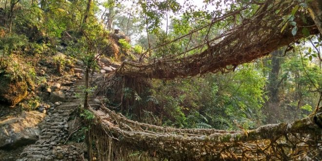 Cherrapunji: Zauberwald mit lebendigen Brücken
