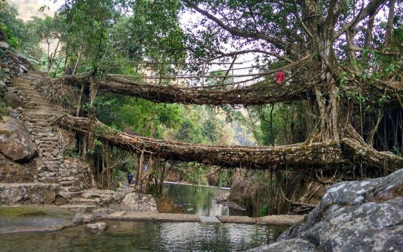 Wurzelbrücken von Cherrapunji