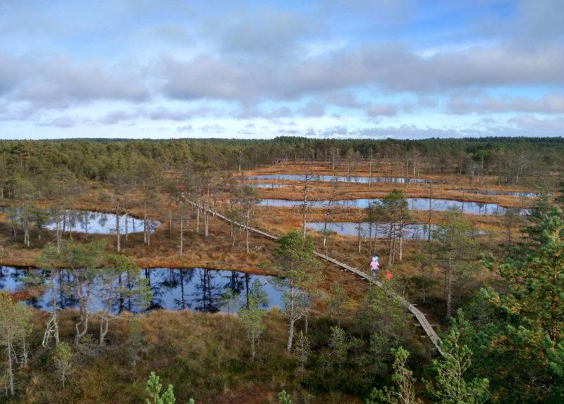 Estland im Mietwagen: Wieso sich das Land so gut für Roadtrips eignet