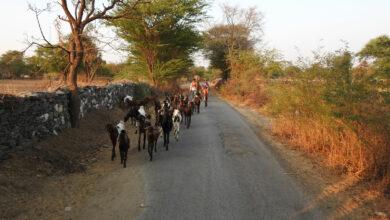 Photo of Indien-Rundreise mit Fahrer: Was dafür und was dagegen spricht