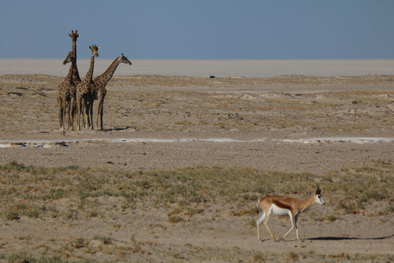 Die Tierwelt Namibias ist beeindruckend.