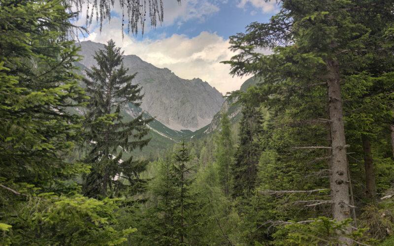 Zwischen den Bäumen lugt immer wieder die atemberaubende Bergkulisse hervor.